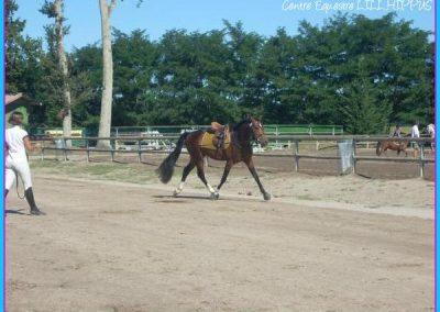 Centre Equestre de Lillhippus